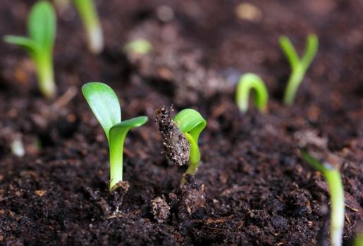 small green seedling